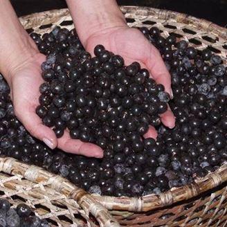 Imagen de Bayas de Acai El Mejor Antioxidante Natural