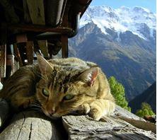 Imagen de ¿Por qué los dueños de gatos tienen mayor salud que las demás personas?