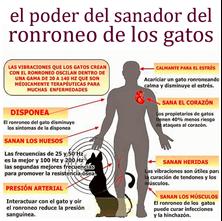 Imagen de RONRONEO TERAPIA El Ronroneo del Gato y su efecto Sanador