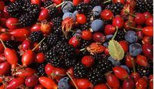 Imagen de Frutos y Bayas Silvestres: Fuentes de Salud y Vitalidad