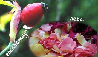 Imagen de La armonía sanadora de la Rosa y el Escaramujo