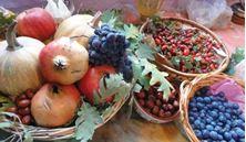 Imagen de Plantas Medicinales y el Equinoccio de Otoño