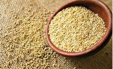 Imagen de Quinoa: Propiedades, Consejos y Sugerencias para una Quinoa ideal