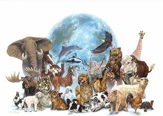 Imagen de Curso Online Protocolo de los 7 animales Maestros