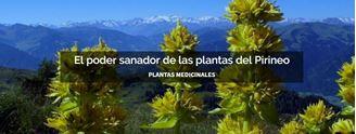 Imagen de EL PODER SANADOR DE LAS PLANTAS DEL PIRINEO